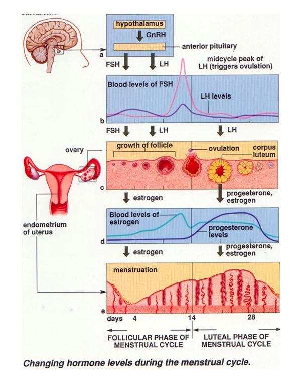 ciclo testosterone e boldenone